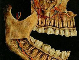 Cauzele subtile ale îmbolnăvirii dinților sau ce nu știați despre dinți #3